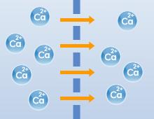 カルシウム吸収のイメージ